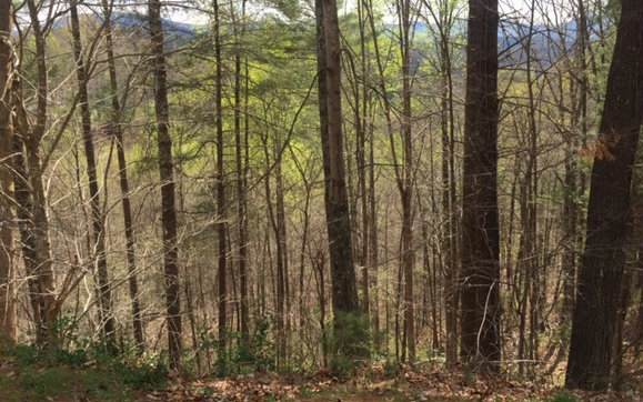 LT 36 Middle Creek, Blairsville, GA 30512 (MLS #296946) :: RE/MAX Town & Country