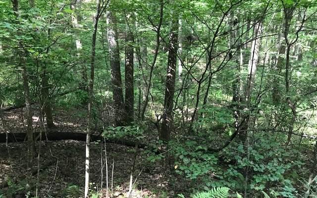 LOT36 Wolf Mnt Estates, Murphy, NC 28906 (MLS #300499) :: Path & Post Real Estate