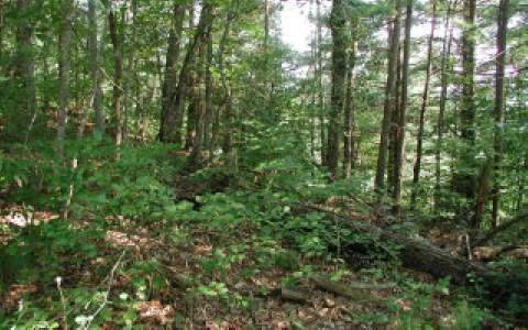 TBD View Ridge Trail, Murphy, NC 28906 (MLS #301133) :: RE/MAX Town & Country