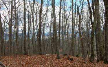 TBD View Ridge Trail, Murphy, NC 28906 (MLS #301140) :: RE/MAX Town & Country