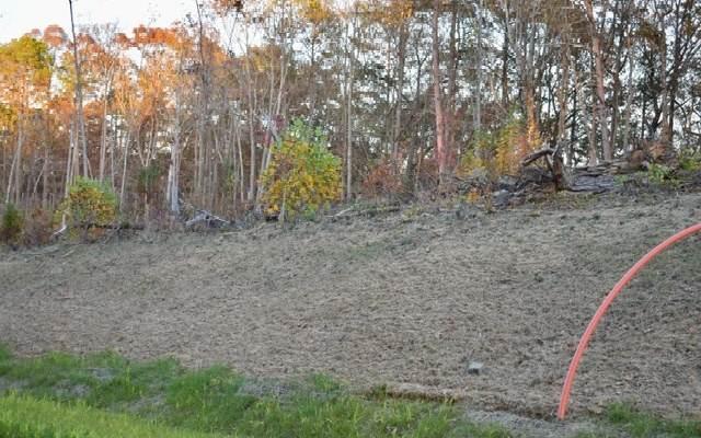 LT 53 Linger Longer, Ellijay, GA 30536 (MLS #302147) :: Path & Post Real Estate