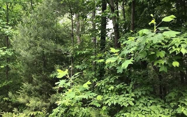 Hemlock Heights, Suches, GA 30572 (MLS #303543) :: Path & Post Real Estate