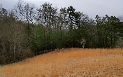 LT 19 Pond Overlook Lane, Morganton, GA 30560 (MLS #303642) :: RE/MAX Town & Country