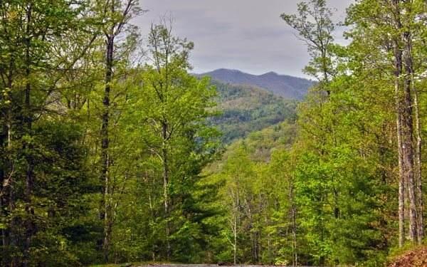 Slate Stone, Hayesville, NC 28904 (MLS #303678) :: Path & Post Real Estate