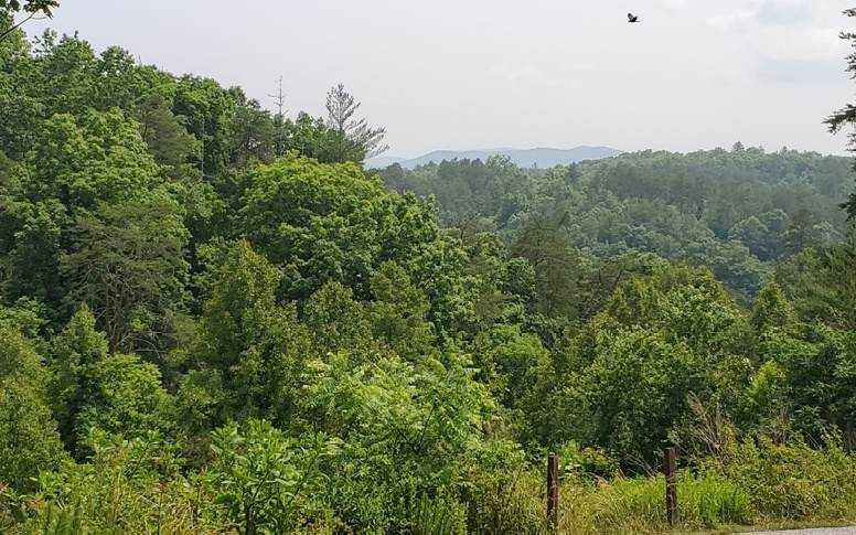 L 37 Toccoa River Forest - Photo 1