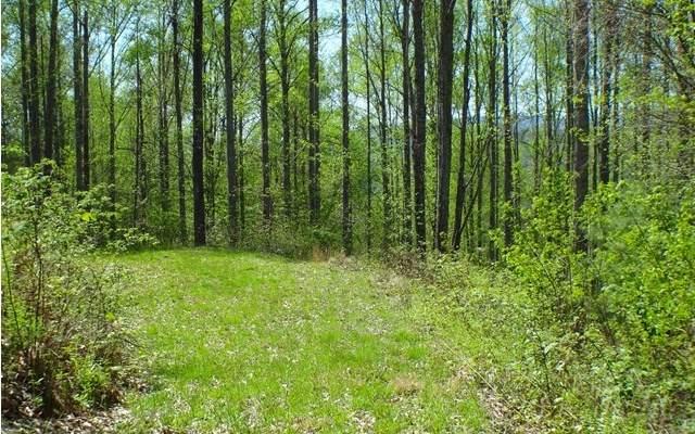 #3 Deweese Rd, Topton, NC 28781 (MLS #304092) :: Path & Post Real Estate