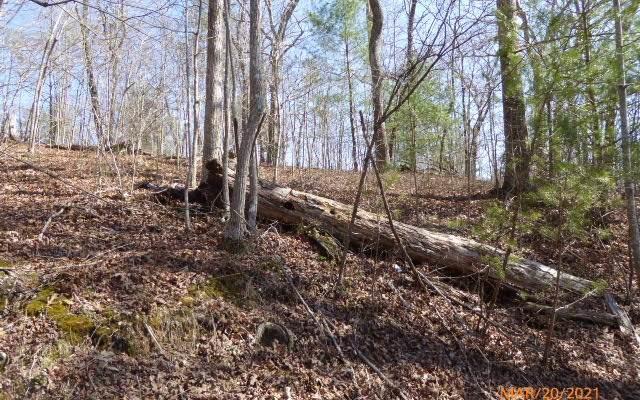 LT 12 Hickory Ridge, Hayesville, NC 28904 (MLS #305210) :: Path & Post Real Estate