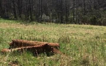 00 Upper Bear Paw Rd - Photo 1