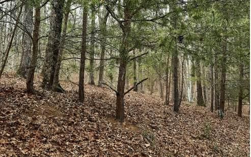 LT 21 Logan Drive, Mineral Bluff, GA 30559 (MLS #305882) :: RE/MAX Town & Country
