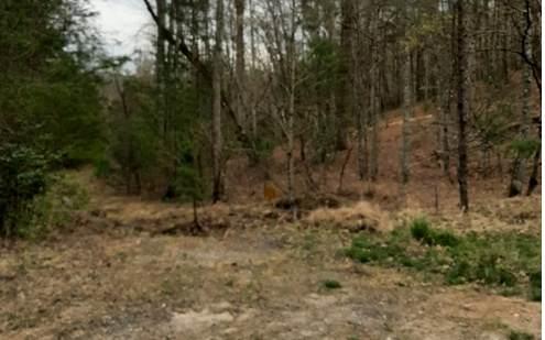 LT 6 Peter Knob, Blue Ridge, GA 30513 (MLS #305893) :: Path & Post Real Estate