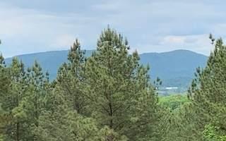 Loftis Mountain Rd - Photo 1
