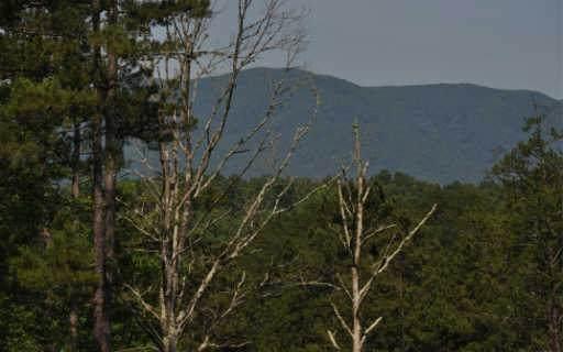 186 Austin Mtn Rd, Copperhill, TN 37317 (MLS #307824) :: RE/MAX Town & Country