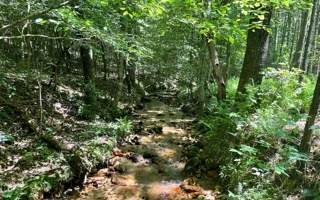 Apple Creek Road - Photo 1