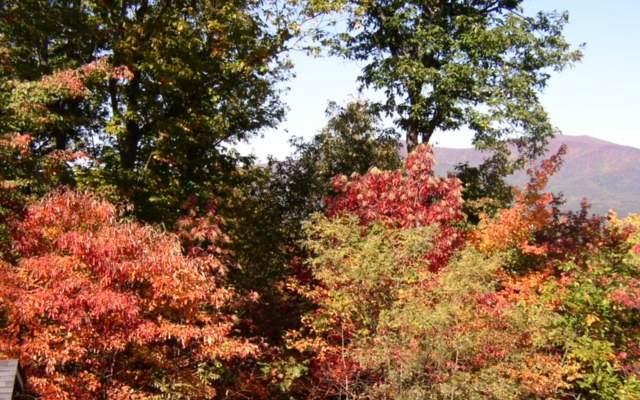 Mollie Mountain Trl, Ellijay, GA 30536 (MLS #308861) :: Path & Post Real Estate