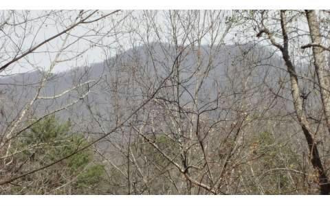 LOT 6 Morgan Creek, Young Harris, GA 30582 (MLS #261866) :: RE/MAX Town & Country