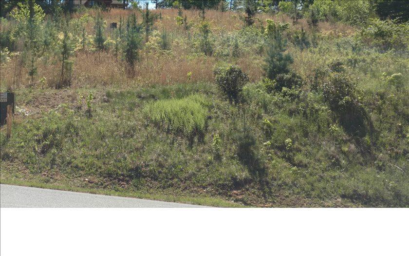 LT 28 Point Overlook Trail - Photo 1
