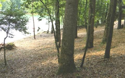 East Lakeview Drive, Hayesville, NC 28904 (MLS #268402) :: RE/MAX Town & Country