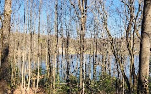 Hefner Lake Rd 16+Ac, East Ellijay, GA 30536 (MLS #294808) :: RE/MAX Town & Country