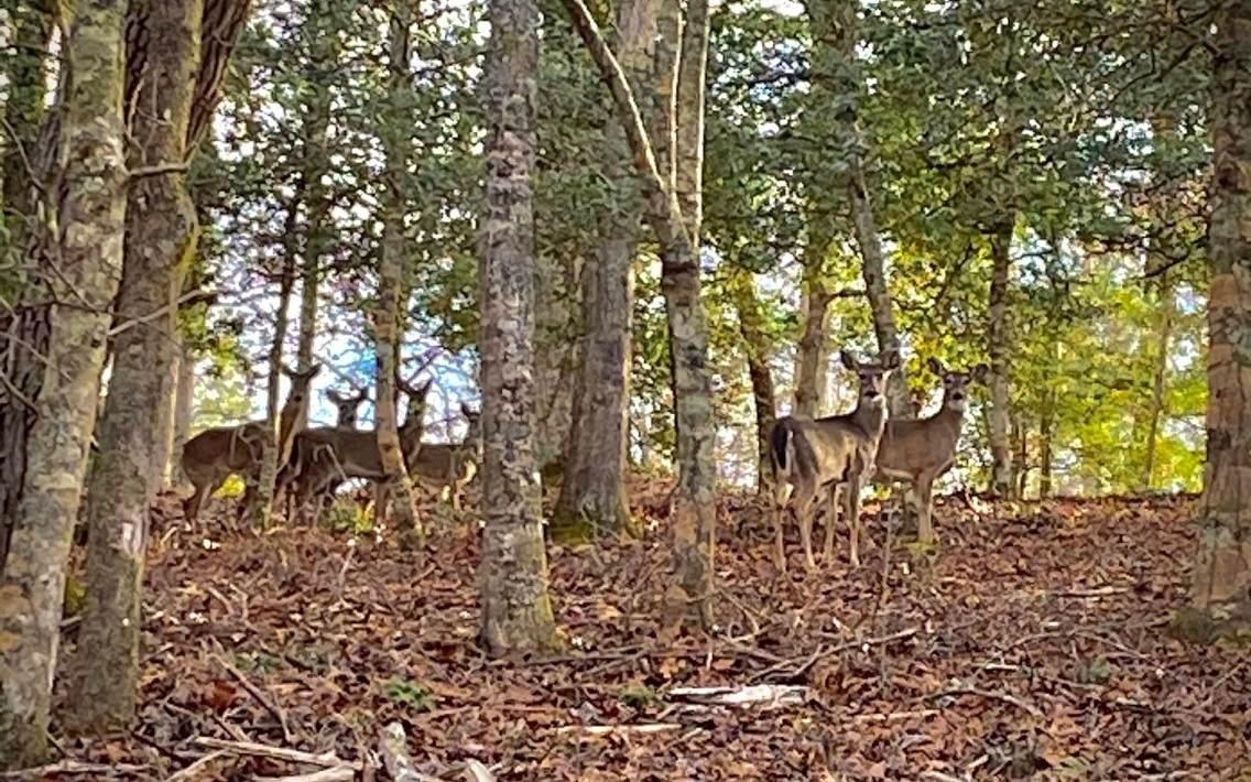 LOT13 Fox Crossing - Photo 1