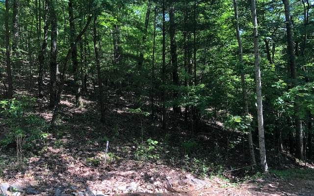 LOT 3 Caylee Anne Drive, Blairsville, GA 30512 (MLS #297963) :: RE/MAX Town & Country