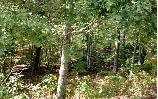 Harris Creek Drive, Ellijay, GA 30540 (MLS #292328) :: RE/MAX Town & Country