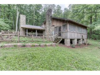 103 Waddell Mountain Road, Greeneville, TN 37743 (MLS #389332) :: Jim Griffin Team