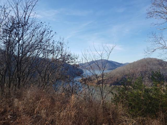 Lot 42 Walnut Bend Drive, Whitesburg, TN 37891 (MLS #9902875) :: Bridge Pointe Real Estate