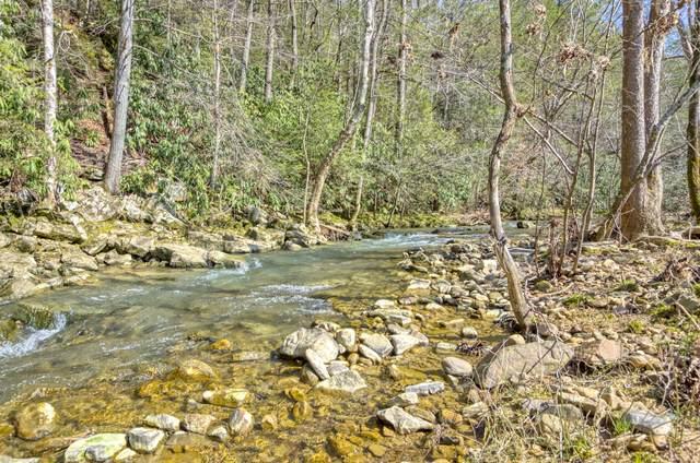 Tbd Early Branch Road, Rogersville, TN 37857 (MLS #9905719) :: Highlands Realty, Inc.