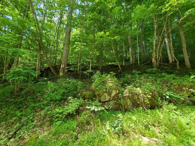 13466 Caney Valley Road, Bristol, VA 24202 (MLS #9909686) :: Highlands Realty, Inc.
