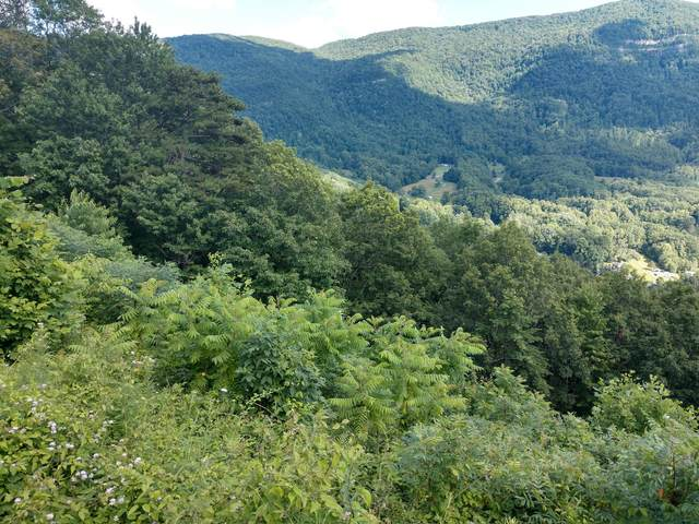 Tbd Lake Road, Big Stone Gap, VA 24219 (MLS #9910206) :: Highlands Realty, Inc.