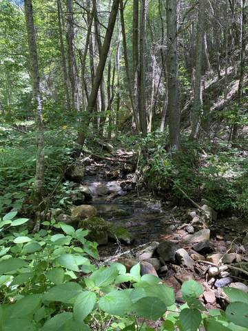 00 Ferguson Cemetery Road, Sneedville, TN 37869 (MLS #9910312) :: Highlands Realty, Inc.