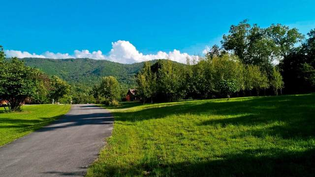 Lot 64 Schisandra Lane, Cosby, TN 37722 (MLS #9912877) :: Tim Stout Group Tri-Cities