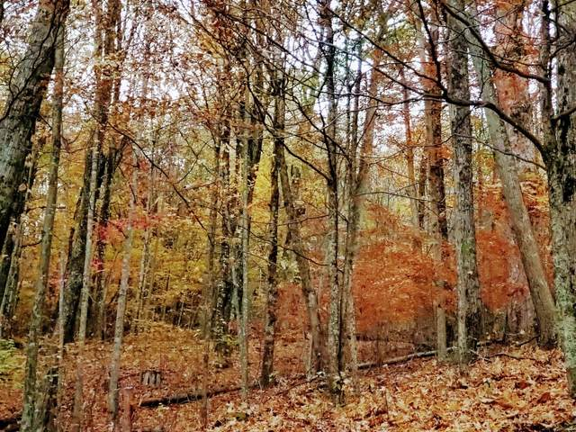 Lot #16 Highway 143, Roan Mountain, TN 37687 (MLS #9914827) :: Conservus Real Estate Group