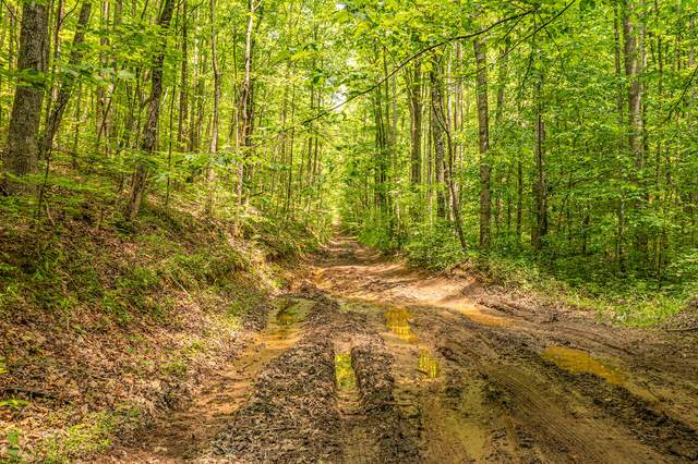 0 Butterfly Hollow Road, Maryville, TN 37801 (MLS #9922853) :: Conservus Real Estate Group