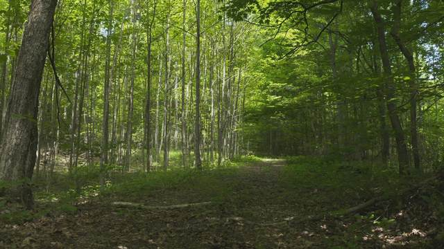 38.75 Acre Short Mountain Road, Sneedville, TN 37869 (MLS #9923255) :: The Lusk Team