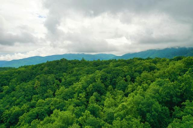 Tbd Bull Mtn Road, Del Rio, TN 37727 (MLS #9923719) :: Highlands Realty, Inc.