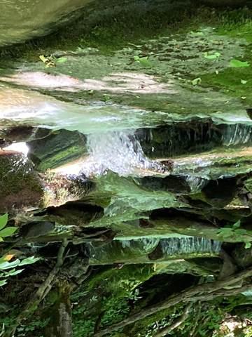 4886 Old Asheville Highway, Flag Pond, TN 37657 (MLS #9924238) :: Highlands Realty, Inc.