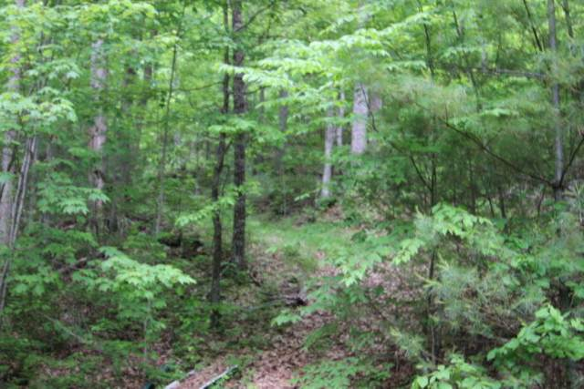 000 Millard Cooper Lane, Mountain City, TN 37683 (MLS #9926566) :: Conservus Real Estate Group
