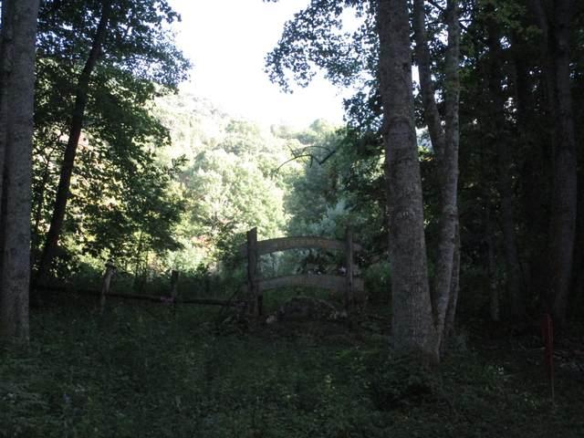 Lot 61 Wilderness Road, Unicoi, TN 37692 (MLS #9928836) :: Red Door Agency, LLC