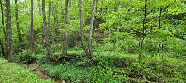 Tbd 21 Acres Bailey Hollow Road, Erwin, TN 37650 (MLS #9922786) :: Highlands Realty, Inc.
