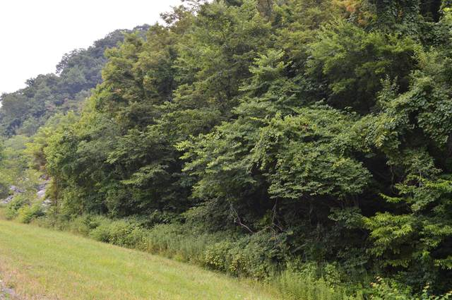Tba Highway 25E, Thorn Hill, TN 37881 (MLS #9926306) :: Tim Stout Group Tri-Cities