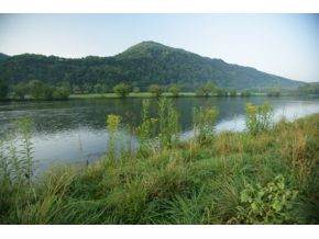 Lot 52 Church Lane, Church Hill, TN 37642 (MLS #281754) :: The Lusk Team