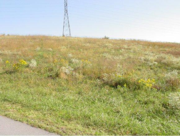 LOT 33 Lariat Drive, Abingdon, VA 24210 (MLS #313019) :: Highlands Realty, Inc.