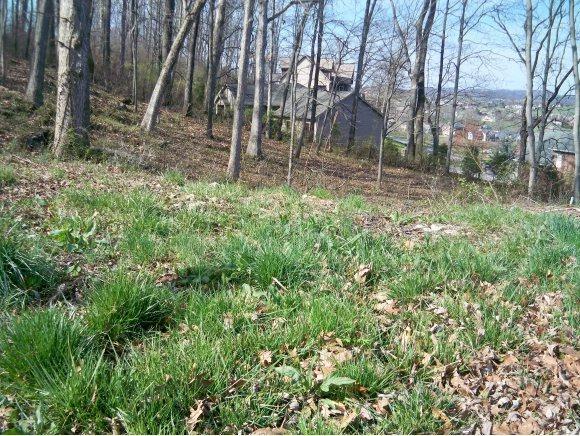 218 Willows Ridge Ct, Johnson City, TN 37601 (MLS #317360) :: Highlands Realty, Inc.