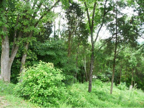 Lot 13 Beechwood Drive, Kingsport, TN 37663 (MLS #338687) :: Highlands Realty, Inc.