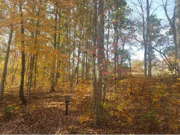 Lot 578 Tortoiseshell Cir., New Tazewell, TN 37825 (MLS #384631) :: Conservus Real Estate Group