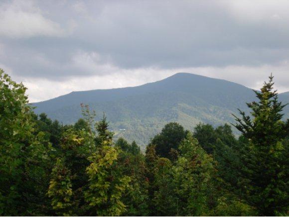 TBD Miller Road, Roan Mountain, TN 37687 (MLS #402570) :: Conservus Real Estate Group