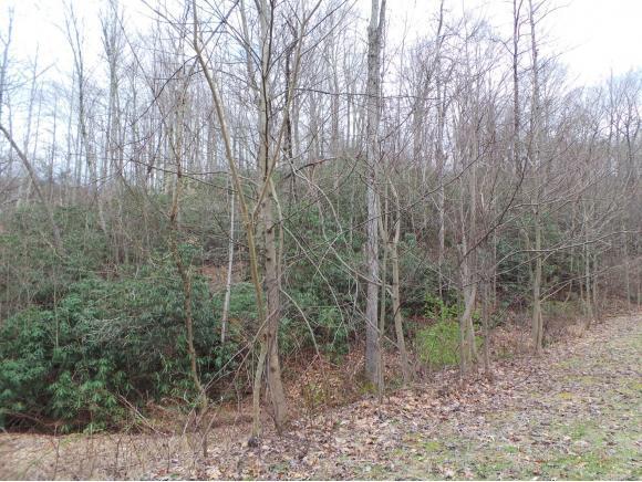LOT 12 Pfeiffer Ridge Road, Johnson City, TN 37601 (MLS #404390) :: Highlands Realty, Inc.