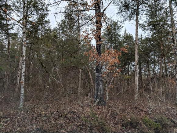 TBD Mill Creek Road, Rye Cove, VA 24244 (MLS #406990) :: Conservus Real Estate Group