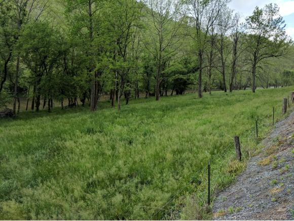 1567 River Road, Weber City, VA 24290 (MLS #407124) :: Highlands Realty, Inc.